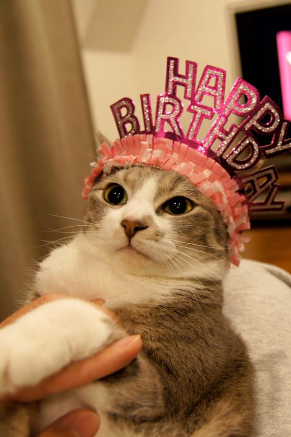 Картинки смешные день рождения с котами смешные, прикольные